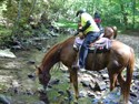 "Saturday Creek Crossing: Rocket getting a drink. Trail: ""Wet Prong of Buffalo Loop"""